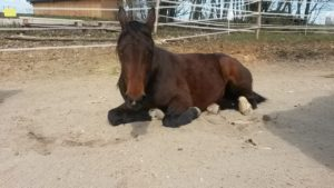 Fellwechsel beim Pferd
