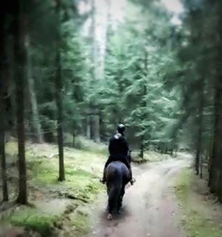 Was gibt es Schöneres, als mit seinem Pferd die Ruhe im Wald zu genießen?