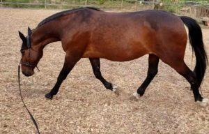 20200428 1840101541074737015036799 Tilly's World Einfach! Pferdeliebe.
