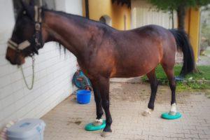 Balance-Pads schulen das Körperbewusstsein deines Pferdes und sind aus unserem Trainingsalltag nicht mehr weg zu denken.