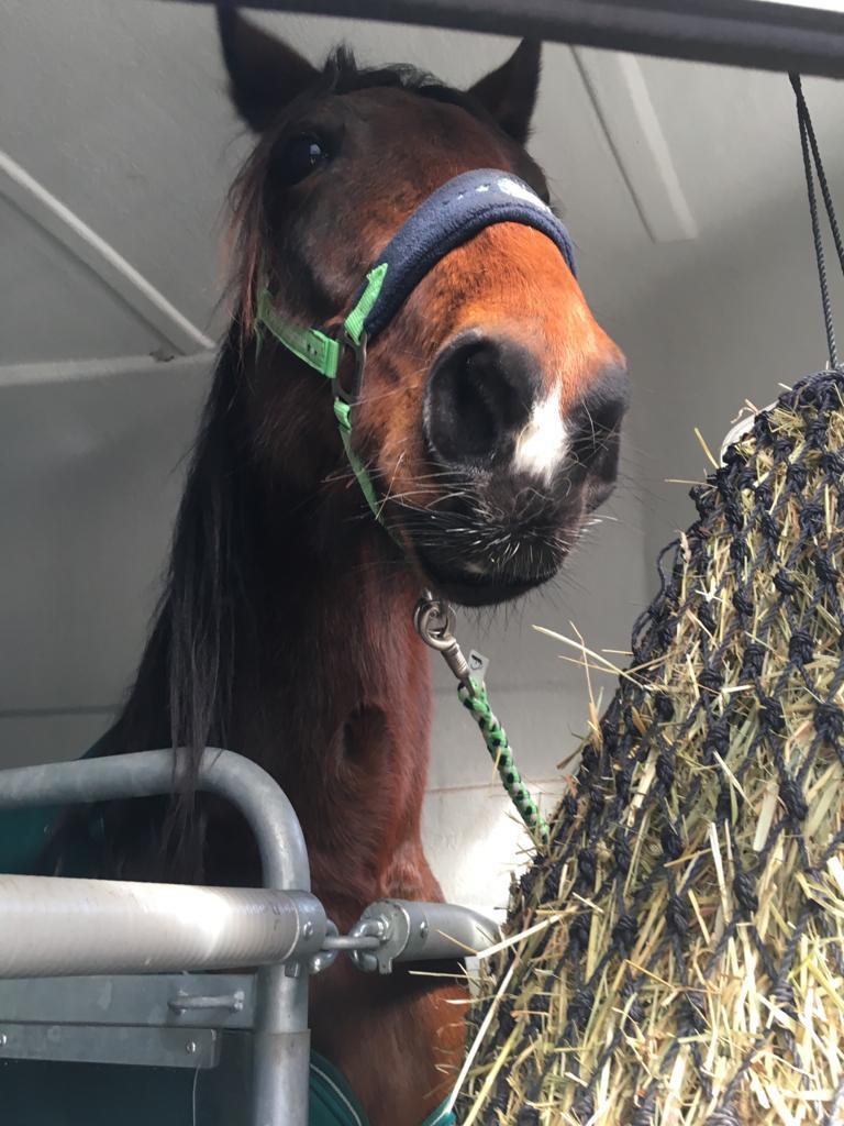 Tilly im Hänger Tilly's World Einfach! Pferdeliebe.