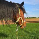 Tilly´s World - Einfach! Pferdeliebe.