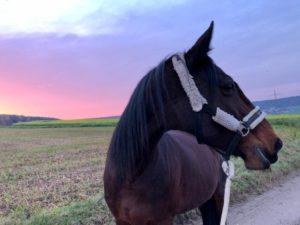 IMG 20200112 WA0002 Tilly's World Einfach! Pferdeliebe.