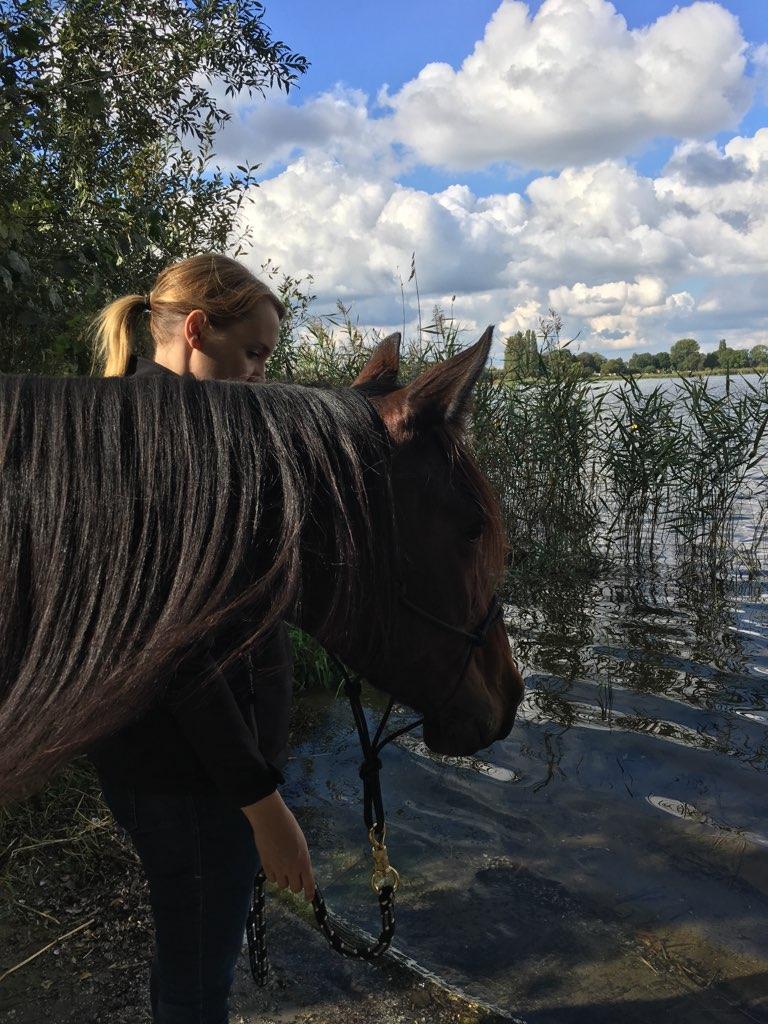 Pferde tragen eine unglaubliche Weisheit in sich.