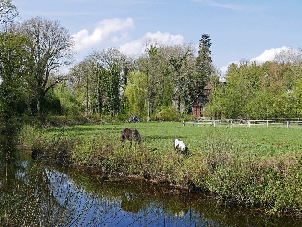 Pferdehaltung naturnahe Pferdehaltung Paddocktrail Aktivstall