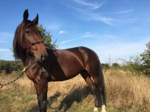 Traberblog Traber ausbilden Traber umschulen Pferdeblog Blog über Traber