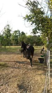 Artgerechte und naturnahe Pferdehaltung sind mir ein sehr wichtiges Anliegen, damit es meinem Pferd gut geht.